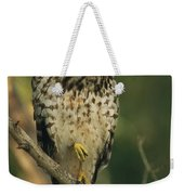 A Red Shouldered Hawk Perches On A Tree Weekender Tote Bag