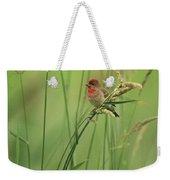A Scarlet Grosbeak Perched On Grass Weekender Tote Bag