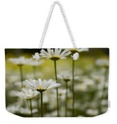 A Small Group Of Daisies Stands Weekender Tote Bag