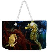 A Spotted Young Blue Crab, Callinectes Weekender Tote Bag