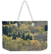 A Stand Of Aspen And Evergreen Trees Weekender Tote Bag