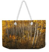 A Stand Of Aspen Trees Displaying Weekender Tote Bag