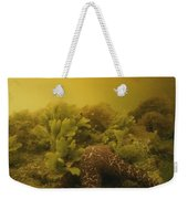 A Starfish In Waters Clouded By A Red Weekender Tote Bag