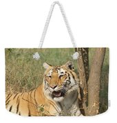 A Tiger Lying Casually But Fully Alert Weekender Tote Bag