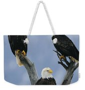 A Trio Of American Bald Eagles Perched Weekender Tote Bag