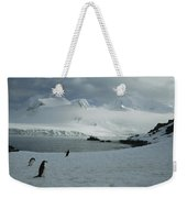 A Trio Of Chin Strap Penguins Amble Weekender Tote Bag