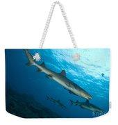 A Trio Of Whitetip Reef Sharks, Kimbe Weekender Tote Bag