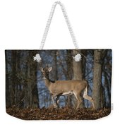 A Wild Deer Caught In Early Morning Weekender Tote Bag