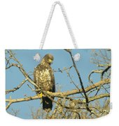 A Young Eagle Gazing Down  Weekender Tote Bag