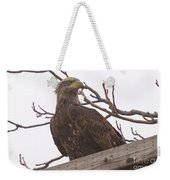 A Young Eagle In The Midst Of Change  Weekender Tote Bag