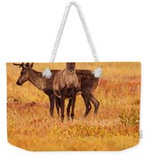 Adult Caribou In The Fall Colours Weekender Tote Bag