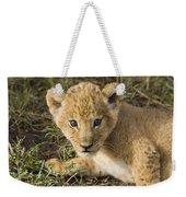 African Lion Panthera Leo Five Week Old Weekender Tote Bag