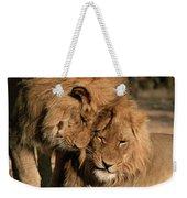African Lion Panthera Leo Two Males, Mt Weekender Tote Bag