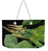African Male Jacksons Chameleon Weekender Tote Bag