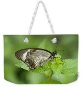 African Papilio Dardanus Butterfly Weekender Tote Bag