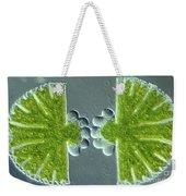 Algae Binary Fission Weekender Tote Bag by M. I. Walker