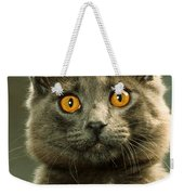 Amber-eyed Domestic House Cat Weekender Tote Bag