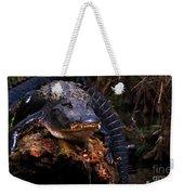 American Alligator On A Cypress Tree Weekender Tote Bag