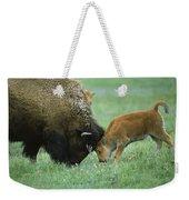 American Bison Cow And Calf Weekender Tote Bag