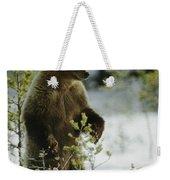 An Brown Bear Ursus Arctos Runs Weekender Tote Bag