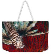 An Invasive Indo-pacific Lionfish Weekender Tote Bag