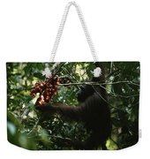 An Orangutan Gorges Himself Weekender Tote Bag