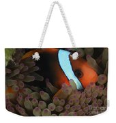 Anemonefish In Purple Tip Anemone Weekender Tote Bag