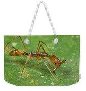 Ant Showing Large Mandibles Guyana Weekender Tote Bag