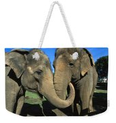 Asian Elephant Elephas Maximus Pair Weekender Tote Bag