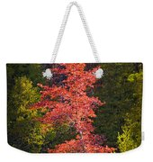 Autumn Scene Of Colorful Red Tree Along The Little Manistee River In Michigan No. 0902 Weekender Tote Bag