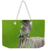 Baby Bluebird On Post Weekender Tote Bag