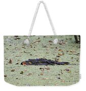 Baby Gator In The Swamp Weekender Tote Bag