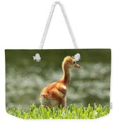 Baby Sandhill In The Sunshine Weekender Tote Bag by Carol Groenen