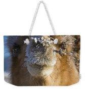 Bactrian Camel Camelus Bactrianus Weekender Tote Bag