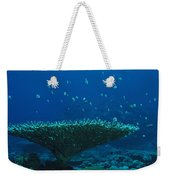 Banded Damselfish Swim Weekender Tote Bag