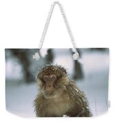 Barbary Macaque Macaca Sylvanus Male Weekender Tote Bag