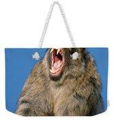 Barbary Macaque Macaca Sylvanus Yawning Weekender Tote Bag