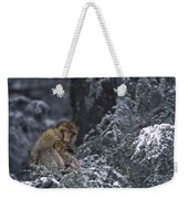 Barbary Macaque Male With Infant Weekender Tote Bag
