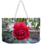 Beautiful Red Rose In A Small Garden Weekender Tote Bag