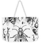 Bee Anatomy Historical Illustration Weekender Tote Bag