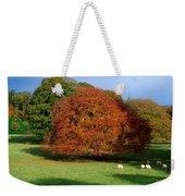 Beech Tree, Glendalough, Co Wicklow Weekender Tote Bag