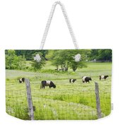 Belted Galloway Cows On  Farm Rockport Maine Photo Weekender Tote Bag by Keith Webber Jr
