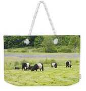 Belted Galloway Cows Pasture Rockport Maine Photograph Weekender Tote Bag