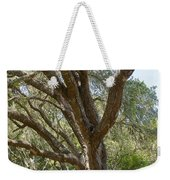 Bench And Tree In Cambria Weekender Tote Bag