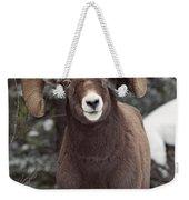 Bighorn Sheep, Maligne Canyon, Jasper Weekender Tote Bag