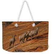 Bighorn Sheep, Zion National Park, Utah Weekender Tote Bag