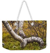 Birch Trees In Autumn Foliage Weekender Tote Bag
