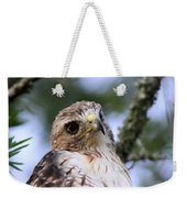Bird - Red-tailed Hawk - Bashful Weekender Tote Bag