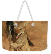 Black-backed Jackal Weekender Tote Bag