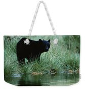 Black Bear Ursus Americanus Weekender Tote Bag
